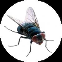 mosca345